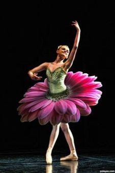b95a090afffbb89d4fd2051c3a1617e2--gerbera-daisies-tutu-ballet